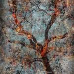 Portfolio: Trees