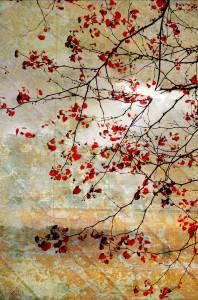 Interface: Digital collage © 2013 Liz Ruest